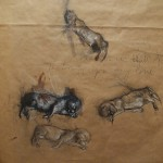 Runt study sheet - graphite, charcoal, chalk, oil on brown paper (80cm x 50cm)